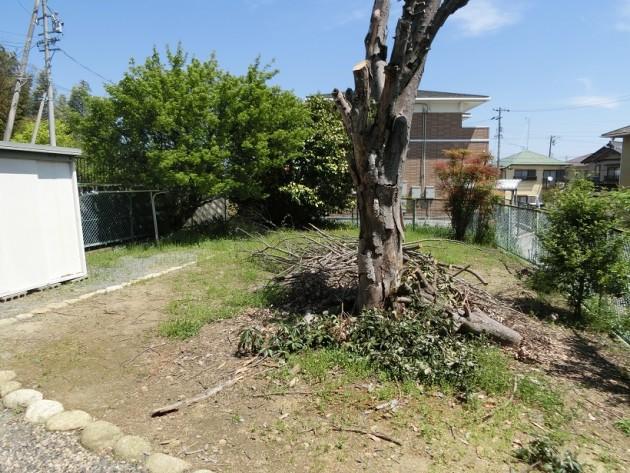 大きな木のある【庭】