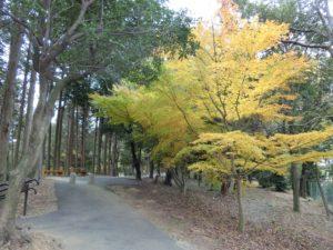 【上川町遊歩道公園今キレイな紅葉①】