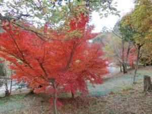 【上川町遊歩道公園今キレイな紅葉②】