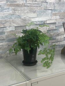 【事務所の植物が増えました】