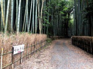 【松阪市ベルファーム近くにある竹林街道】