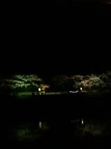 夜桜五十鈴川